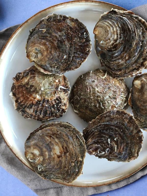 Limfjordsoester oester oyster